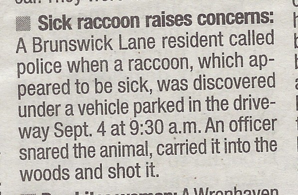Sick raccoon